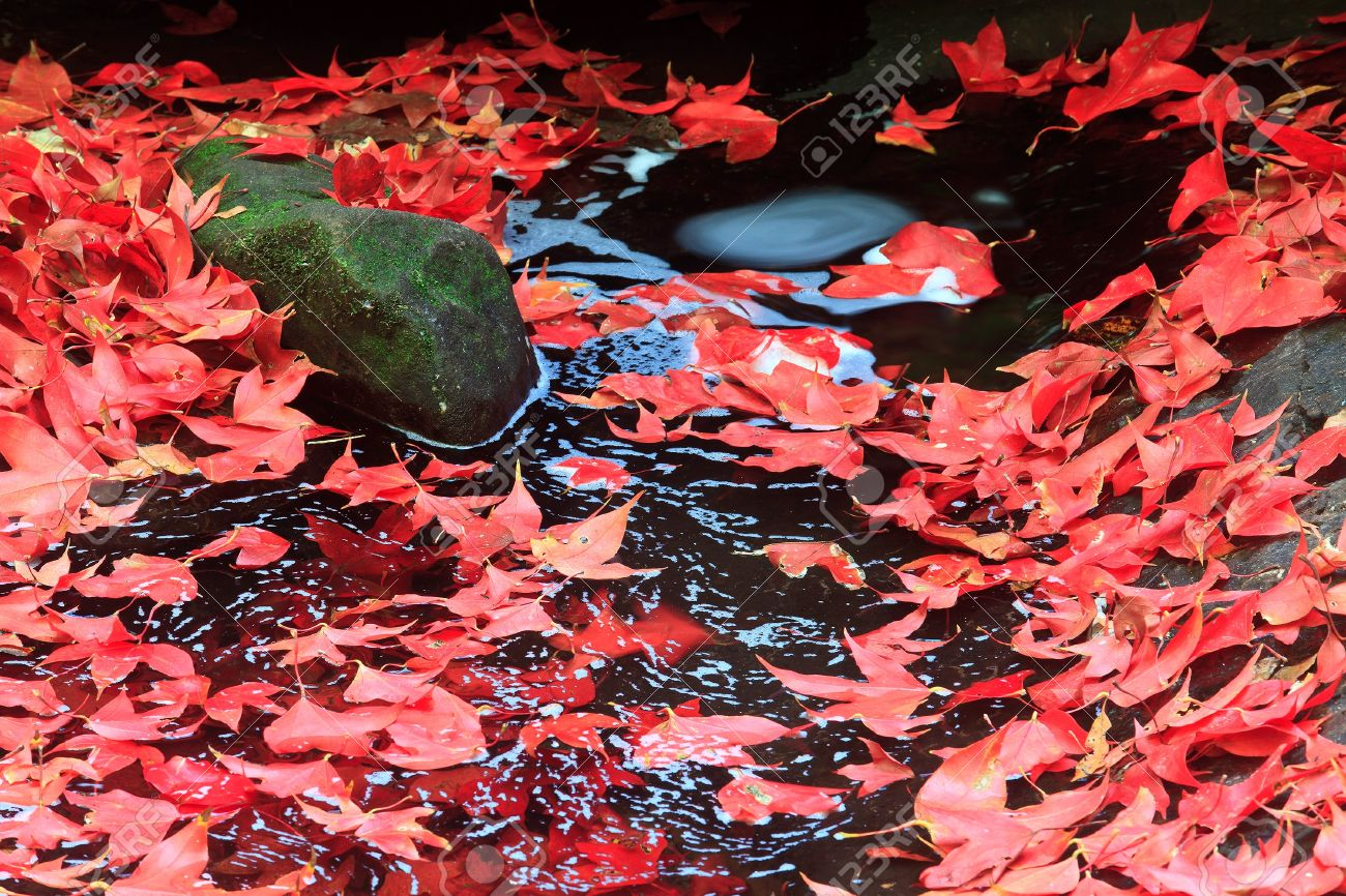 14394346-Red-maple-leaf-during-fall-at-Phukradung-National-Park-Loei-Thailand